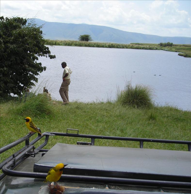 birds•Ngorongoro