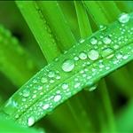 green034.jpg