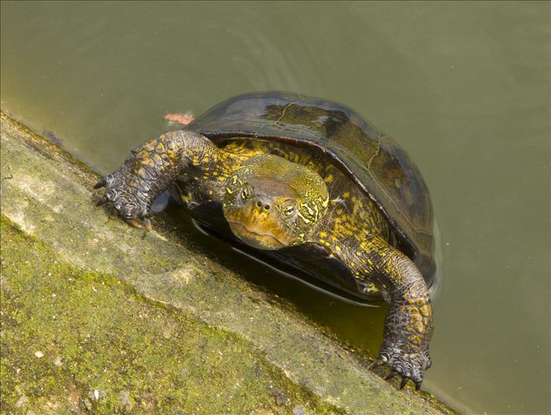 Tortoise Ninja :)