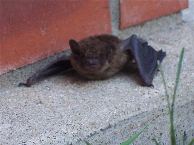 poor bat on the church steps