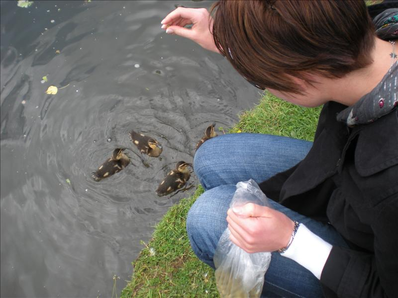 Holly feeding the ducks - 18th May