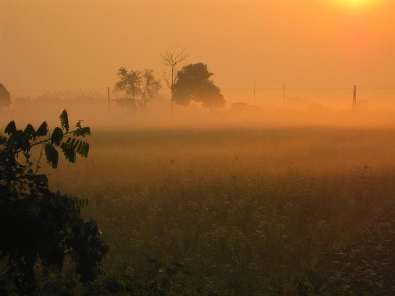 fog in the morning on the tobacco fields