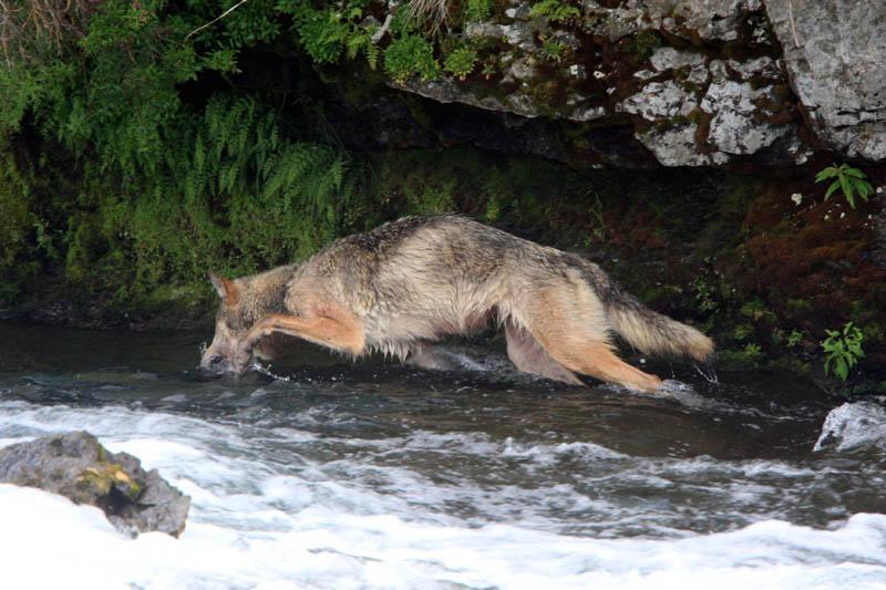 ulvehopp (2).png