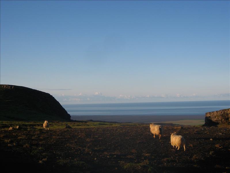 Island2008 998.jpg