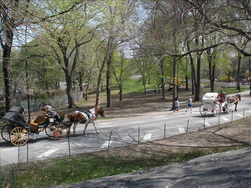 sentral park