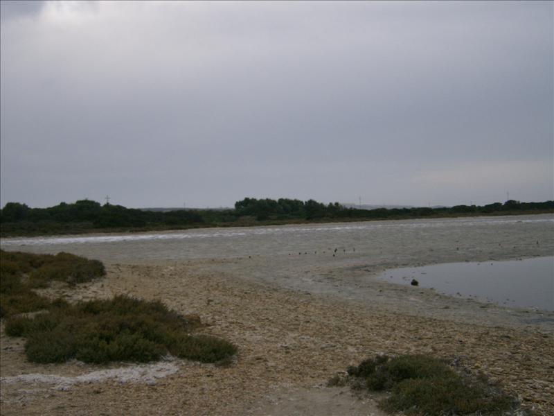 pond at Saline beach