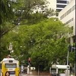 Brisbane 11.jpg