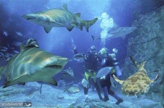 Shark Dive-Mooloolaba-Australia