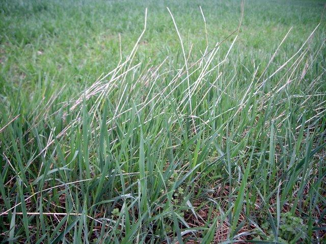 遠看綠綠的,就是這些草XD