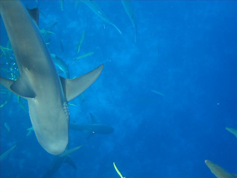 Shark right below me