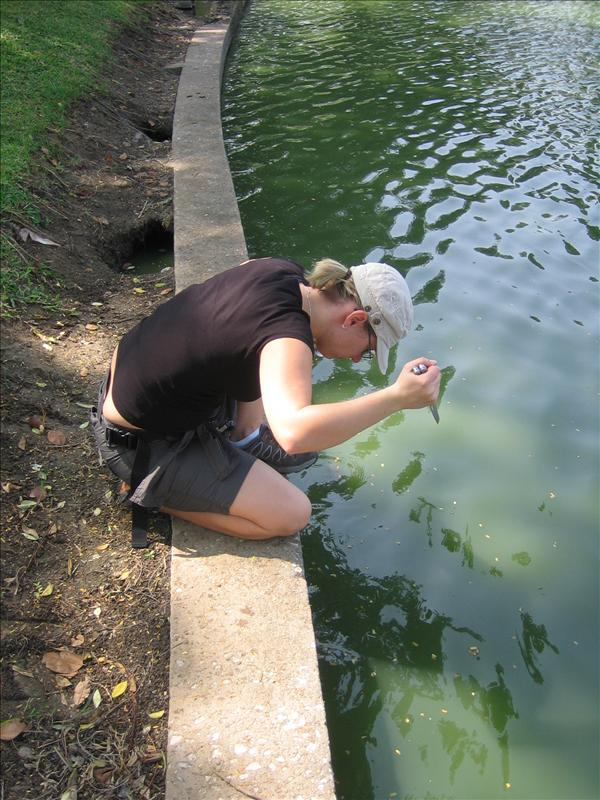 Kathleen jagt das Mittag im Lumphini Park...