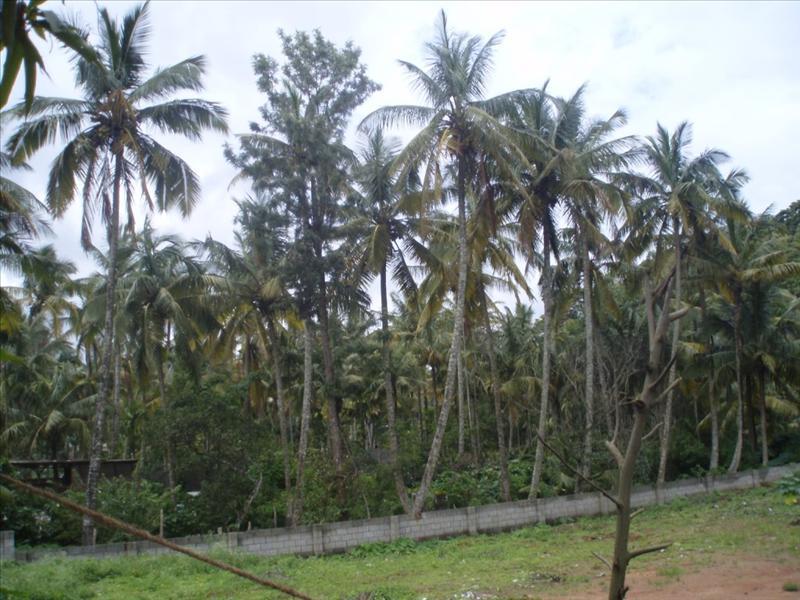 Periyar - South India