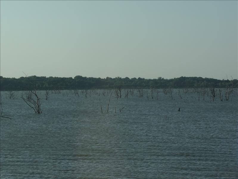 Lake Lavon near Allen, TX with dead trees all over