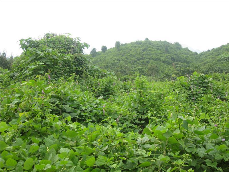 Lush mountenous surroundings