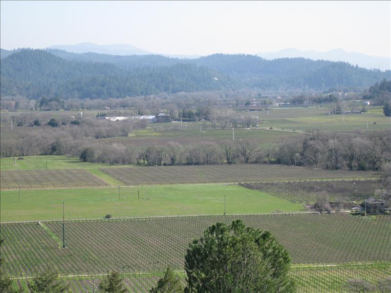 The View from the top of Sterling.. Napa Valley