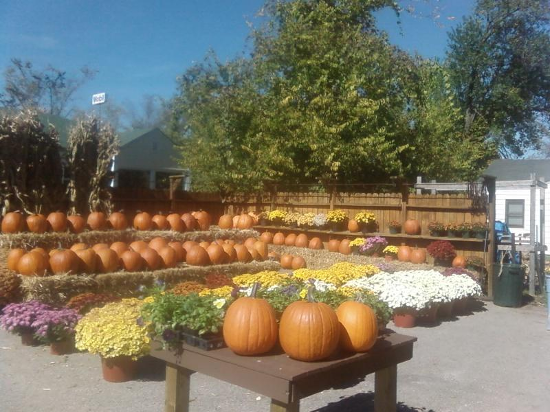 the pumkins of October on the lot