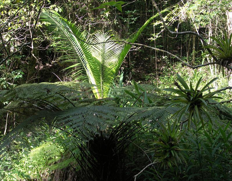Palm, fern