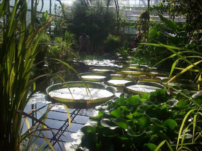 The oxford botanical garden greenhouse