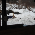snow day 007.JPG