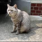 University CAT = AKA = FELIX!!!