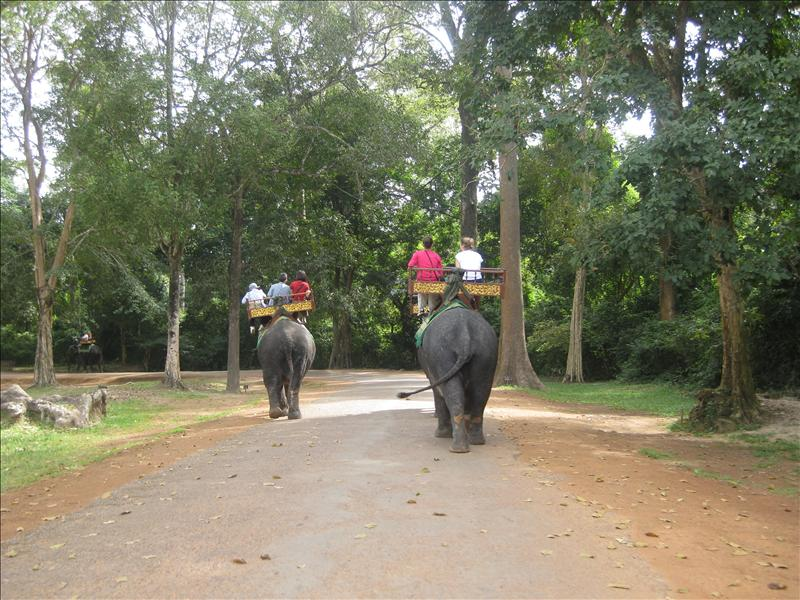 Elephant rides through the Angkor Wats