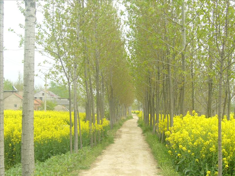 a path to a mood,yancheng