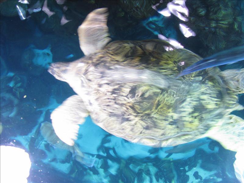 mozesgrote schildpad