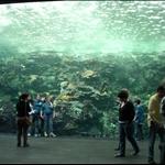 Giant tank in Georgia Aquarium. I was really touched.