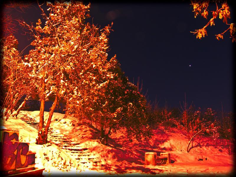 Mysterios trees