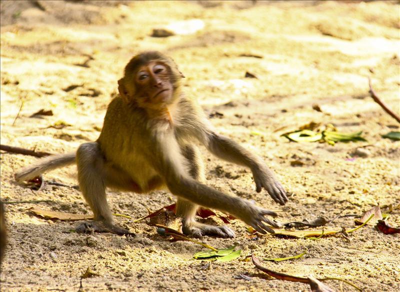 monkey...
