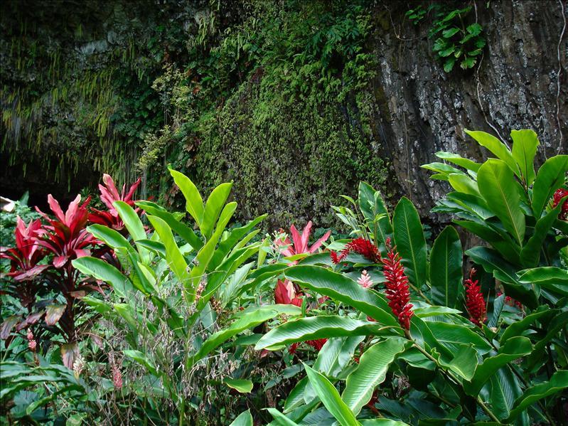 Kauai - Fern Grotto