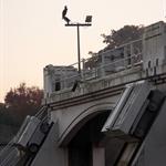 Weir, cormorant