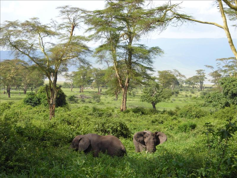 elephants•Ngorongoro