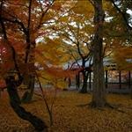 the Tofuku-ji
