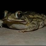 frog 019.jpg