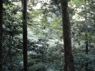 箕面滝 103.mpg
