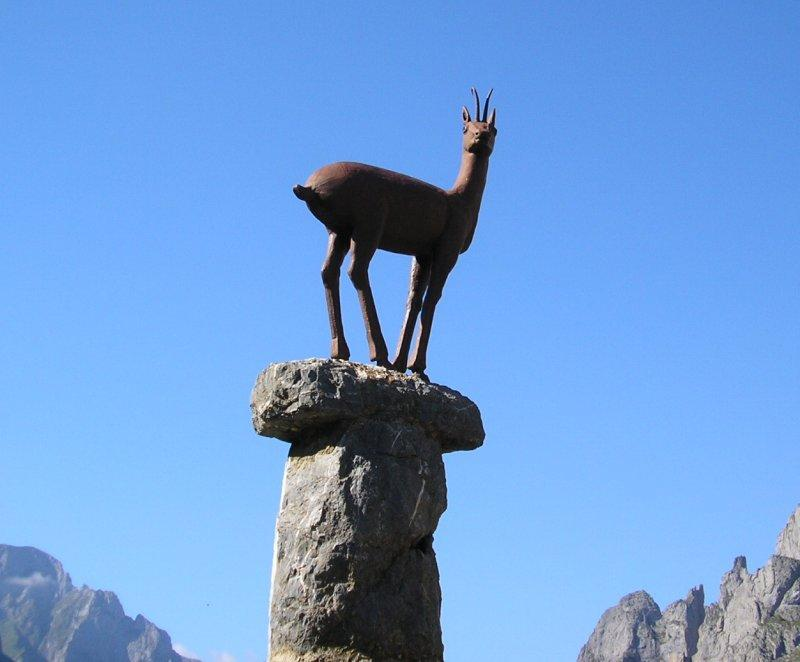 .. and the chamois at another nearby.