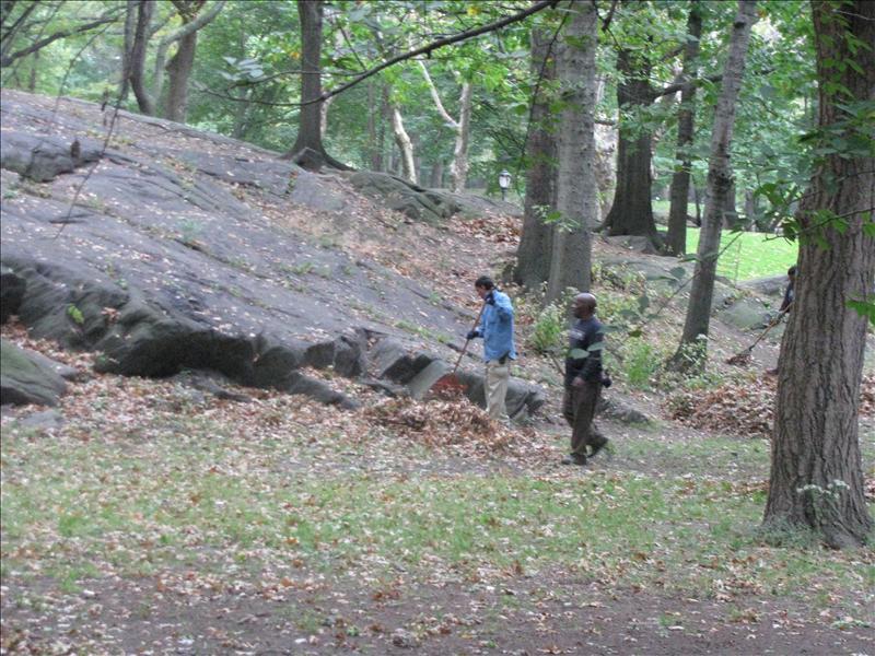 bladeren opvegen in central park, mooi sjouwtje