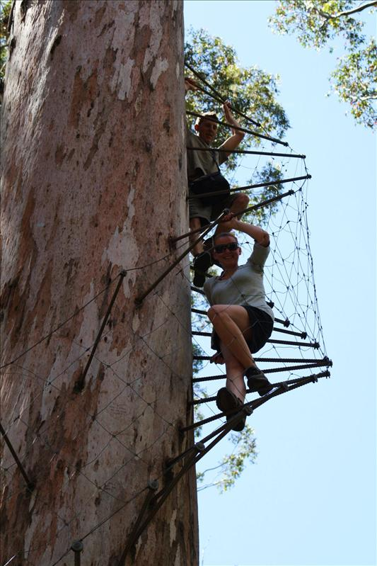 Climbing down the tallest tree in Australia!! Scary as hell!