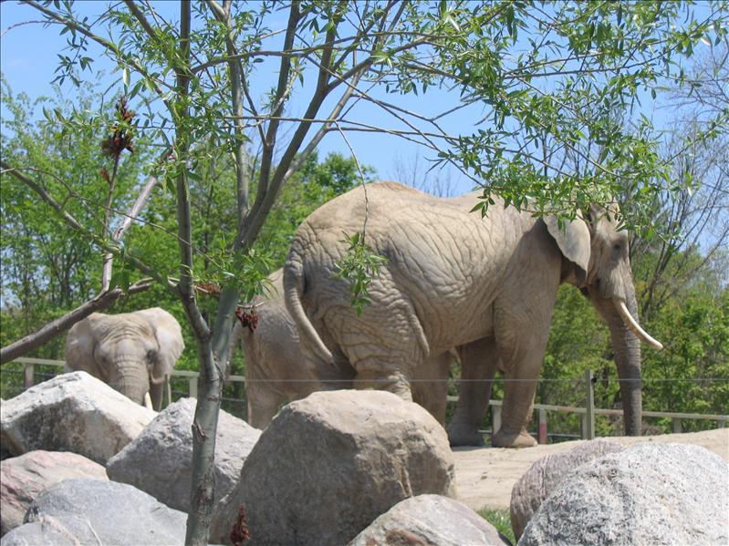 Toronto Zoo - 16