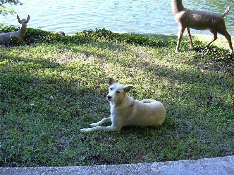 a dog near the house is fun