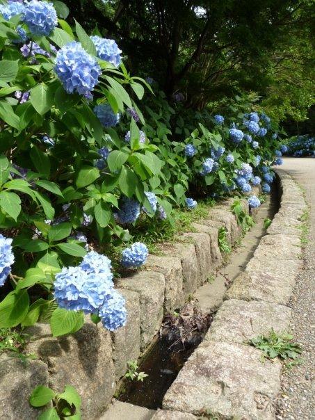 Ajisai path