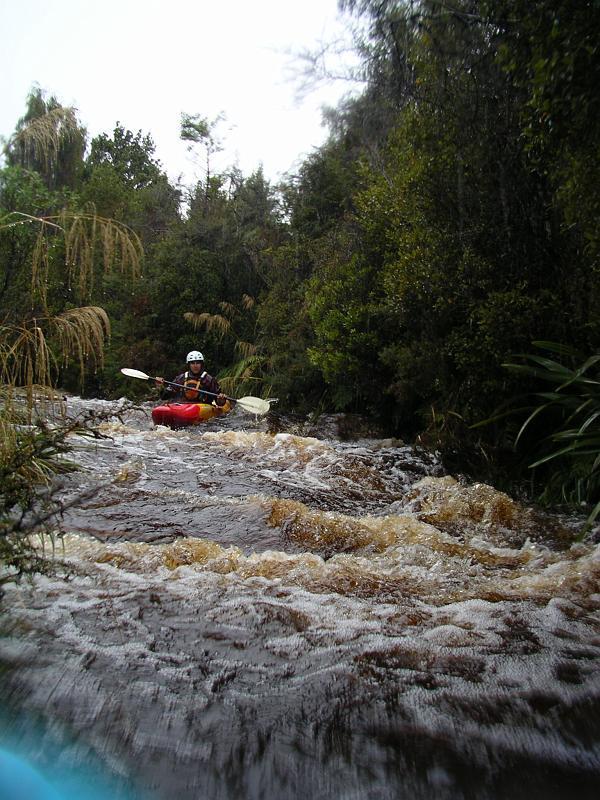 IMGP3497 Trib of Bluebottle Creek.jpg