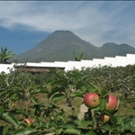 Malang,the best apple in Indonesia come from here.