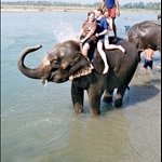 Sophie, Suzanne & me, Chitwan