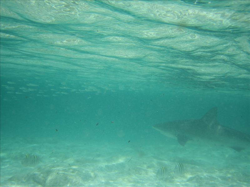 Shark.  Dun dun dun dun dun dun~