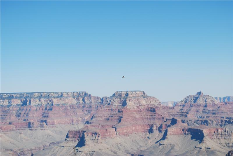 Hawk over the Grand Canyon