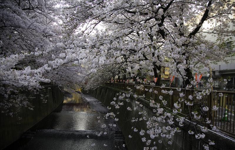 Meguro Riviére