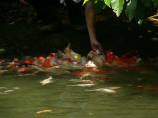魚群去角皮.MOV