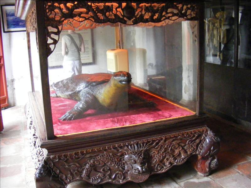Embalmed Tortoise Hanoi